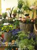 Blumenmarkt-3.jpg